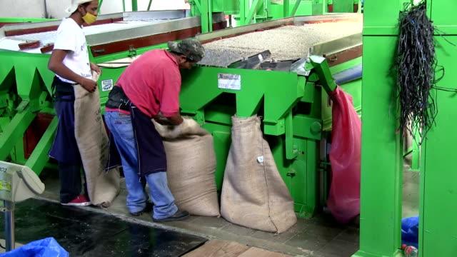nicaragua, matagalpa, processing arabian coffee (species coffea arabica) - jeans stock videos & royalty-free footage