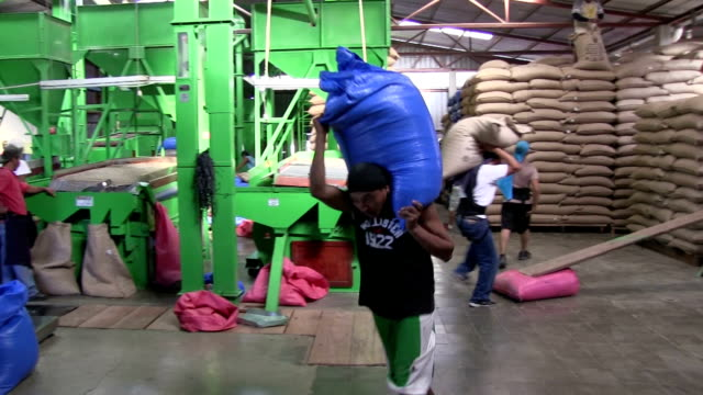 nicaragua, matagalpa, processing arabian coffee (species coffea arabica) - bag stock videos & royalty-free footage