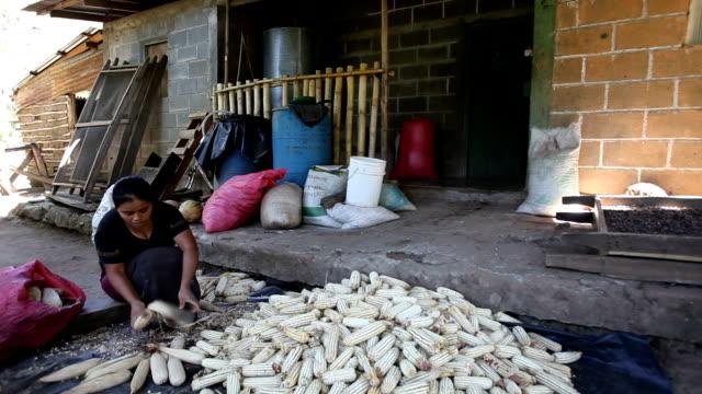 nicaragua, matagalpa, woman who controls the quality of corn cobs - nicaragua stock videos and b-roll footage