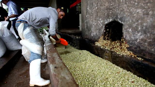 nicaragua, pantasma, processing arabian coffee (species coffea arabica) - plastic cap stock videos & royalty-free footage