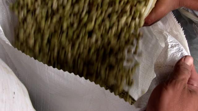 nicaragua, pantasma, processing arabian coffee (species coffea arabica) - bag stock videos & royalty-free footage