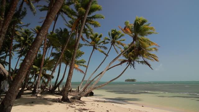 nicaragua plage et palmiers - ヤシの木点の映像素材/bロール