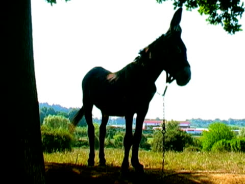 nice donkey in the countryside - 2006 stock videos and b-roll footage