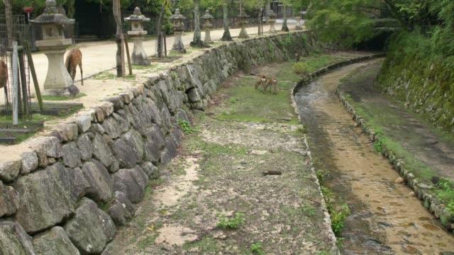 a nice park on miyajima island at low tide after rain,  japan - bassa marea video stock e b–roll