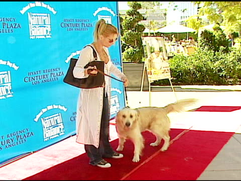 nicollette sheridan at the dine with your dog day at the hyatt regency century plaza in century city, california on october 19, 2006. - hyatt regency stock videos & royalty-free footage