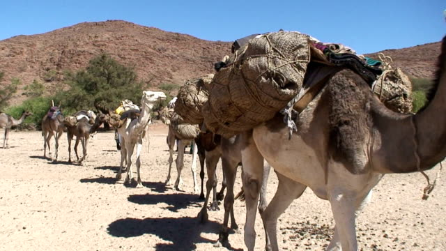 niger air mountain caravan of camels with tuareg - hooved animal stock videos & royalty-free footage
