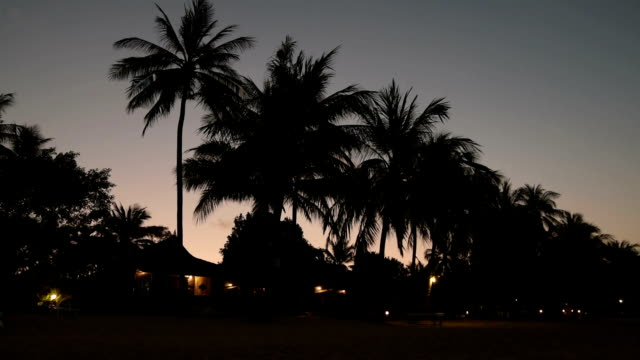 night at beach with palm trees - lockdown stock videos & royalty-free footage