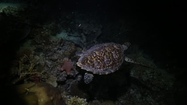 Night dive and a turtle