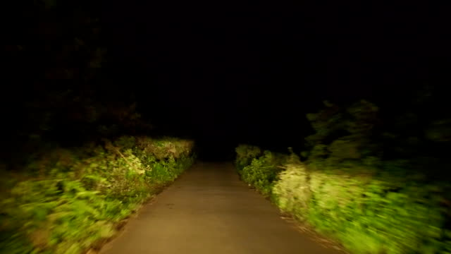 Night Drive Through the Forest on Winding Road
