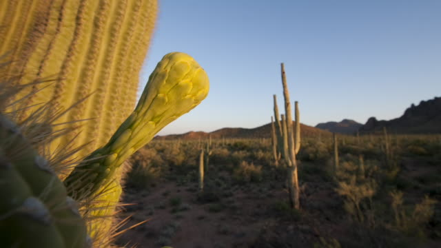 night falls over the sonoran desert. available in hd. - cactus stock-videos und b-roll-filmmaterial