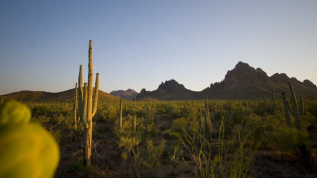 Night falls over the Sonoran Desert in Arizona. Available in HD.