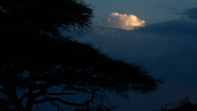 Night falls over thorn tree