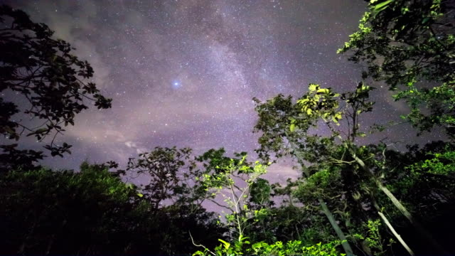 night forest and the milky way