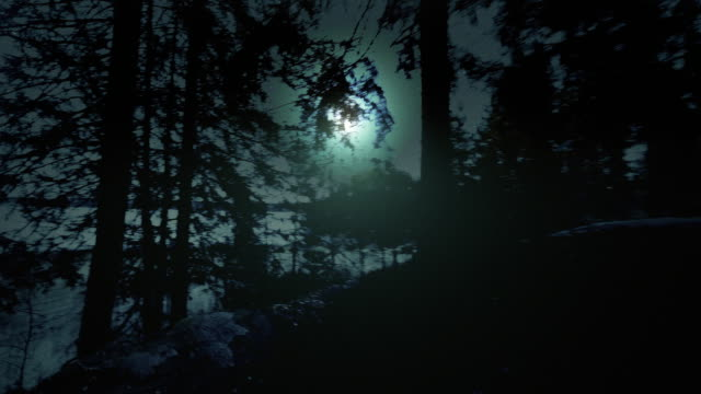 foresta di notte - paranormale video stock e b–roll
