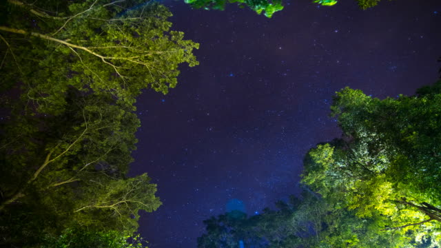 night forest with stars