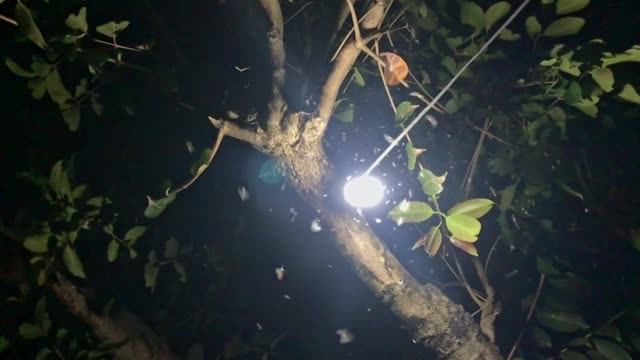 night insects swirling around a light bulb - limb body part stock videos & royalty-free footage