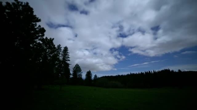 vídeos y material grabado en eventos de stock de night lush gren meadow and moonlight under the stars next to a forest silhouette - oregon us state
