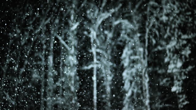 SLO MO Night portrait of trees during snowfall