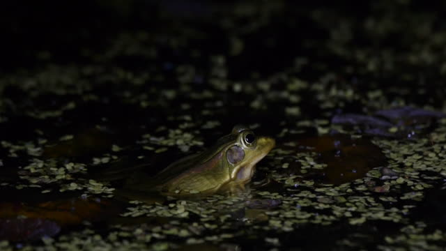 night scenery of a seoul pond frog at wetland - pond stock videos & royalty-free footage