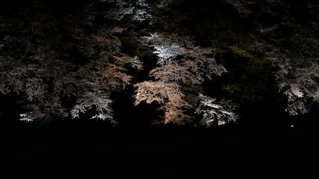 night scenery of banwolseong with cherry blossoms in gyeongju - gyeongju stock videos and b-roll footage