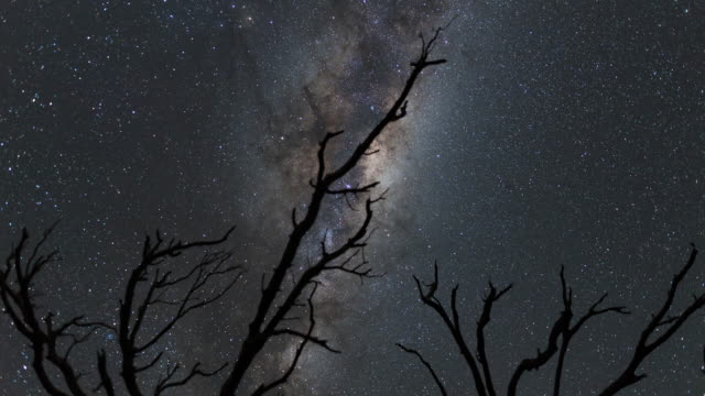 Night Scenery view of Milky Way and starfield over Tree