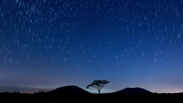 Night scenery with a single tree and star trail at saebyeol oreum Volcanic Cone