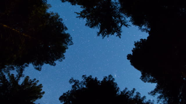 night sky above the giant redwood forest - sequoia rossa video stock e b–roll