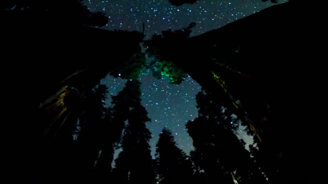 night sky - above the treetops - giant sequoia stock videos and b-roll footage