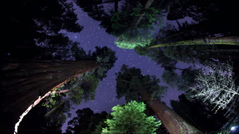 night sky - above the treetops - sequoia stock videos & royalty-free footage