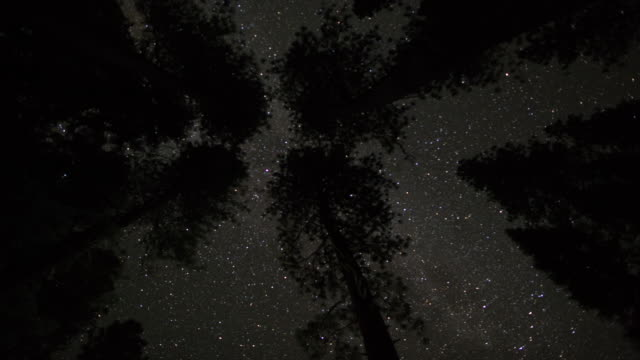 Night Sky Above the Treetops
