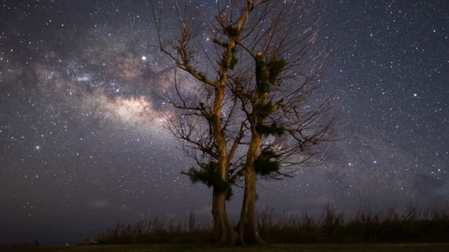 night sky and a tree in forbidden island / saipan, northern mariana islands, united states - anhöhe stock-videos und b-roll-filmmaterial