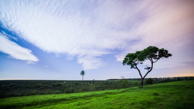 night sky and the tree - single tree stock videos & royalty-free footage