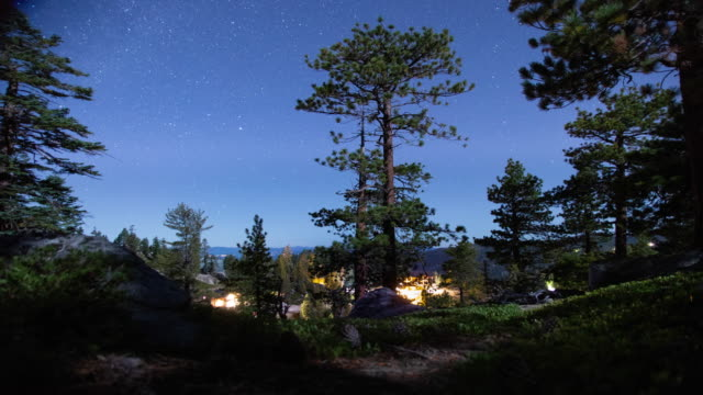 night sky forest landscape with moonlight - pine tree stock videos & royalty-free footage