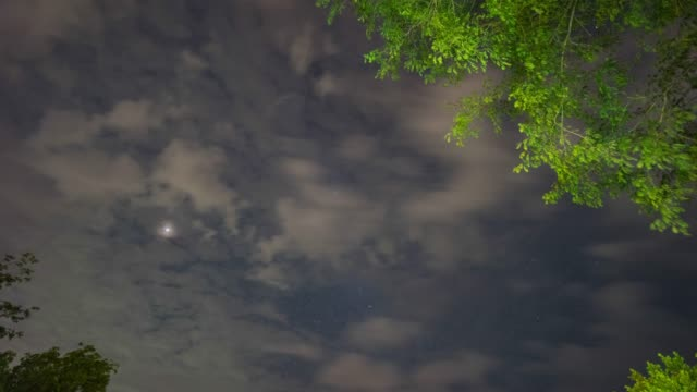 t/l nacht sky im tropenwald mit bewegenden sternen - sternenhimmel stock-videos und b-roll-filmmaterial