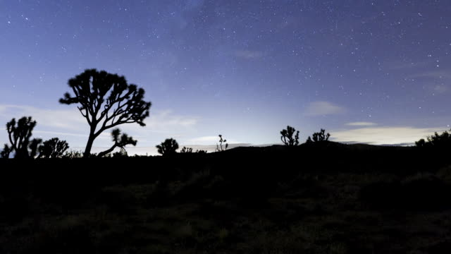ms tu t/l night sky over desert landscape / joshua tree national park, ca, united states  - joshua tree national park stock videos & royalty-free footage