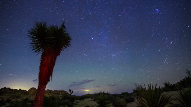 night sky over joshua tree - time lapse - light trail stock videos & royalty-free footage