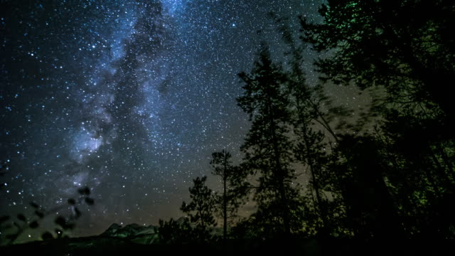night sky over pine tree - ethereal stock videos and b-roll footage