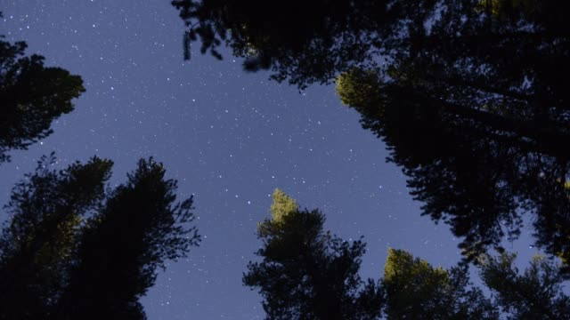 Night sky viewed from forest floor