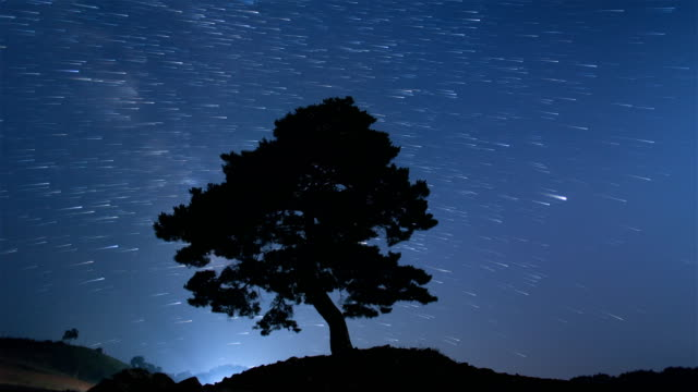 night sky with a pine tree at time capsule park / jeongseon-gun, gangwon-do, south korea - pinaceae stock videos & royalty-free footage