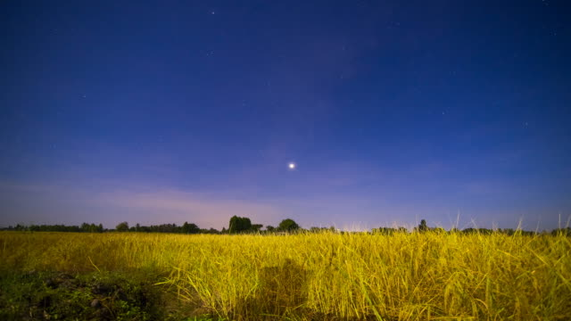 vidéos et rushes de ciel de nuit avec le champ de riz - crépuscule