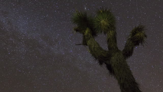 MS POV T/L Night sky with stars above  yucca palm tree / Joahua Tree National Park,  CA, United States
