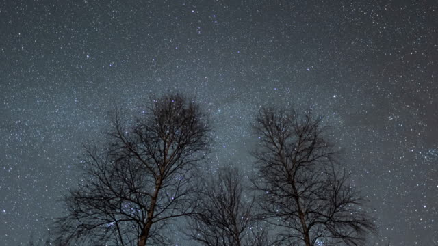 night sky with trees / gyeongsangnam-do, south korea - 宇宙・天文点の映像素材/bロール