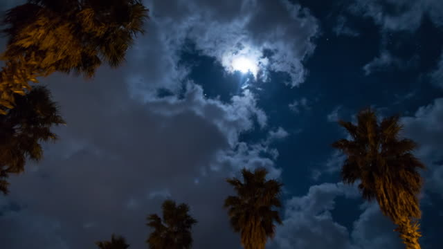 Night skyscape of Seogwipo with palm trees