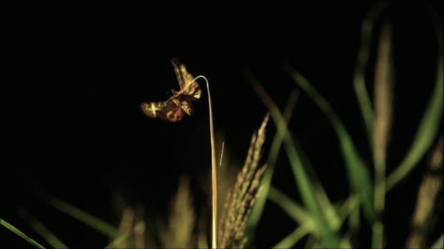 night time activities of moths - lake neusiedl - moth stock videos and b-roll footage