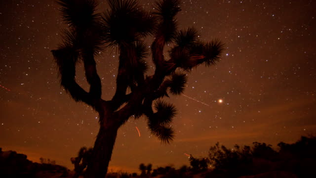 0038 night time lapse at joshua tree - joshua tree national park stock videos & royalty-free footage