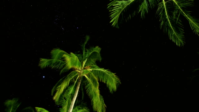 night time lapse over coconut trees - palm leaf stock videos & royalty-free footage