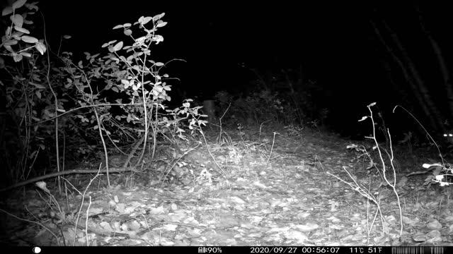 vídeos y material grabado en eventos de stock de night time video clips from trail camera - camuflaje