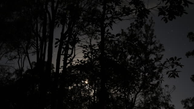Night timelapse at Crows Nest with the moon, trees and stars, Queensland, Australia