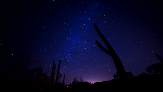 night tl of the milky way behind cactus in the sonoran desert - arizona cactus stock videos & royalty-free footage