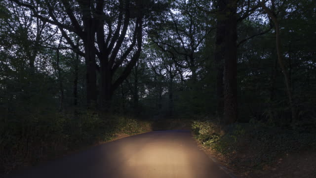 Night to day Hyperlapse / TL drive in forest